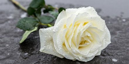 Assurance obsèques : InMemori, la plateforme française qui invente le deuil 2.0