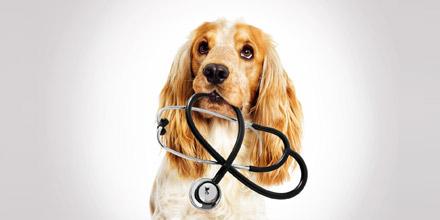 Assurez la santé de votre animal à moindre coût