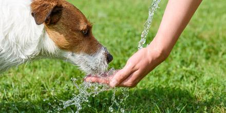 Comment protéger votre animal de la chaleur ?