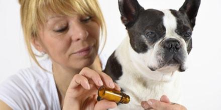 L'homéopathie est une alternative pour soigner efficacement et à moindre coût votre animal de compagnie