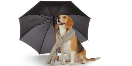 Protégez la santé de votre animal de compagnie avant l'hiver