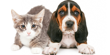 Assurance santé chien et chat : à la belle saison, protégez votre animal de compagnie des parasites