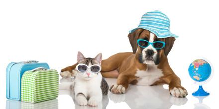 Toutes les solutions pour faire garder votre animal pendant vos vacances