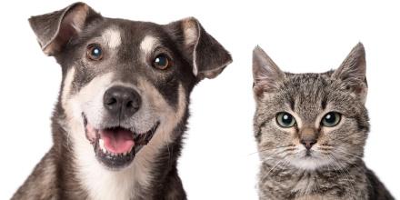 Une réduction d'impôt pour adopter un chien ou un chat