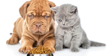Assurance santé animaux : le marché juteux du bien-être animal