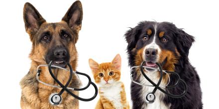 Pourquoi l'assurance santé animale devrait s'organiser en réseau